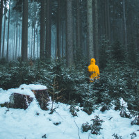 Alone  Woods  Snow  Yellow Profile Picture