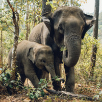 Animals  Elephants  Family Profile Picture