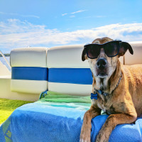 Cool  Dog  Boat Profile Picture