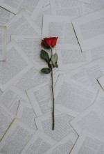 Rose  Flower  Love Status Picture