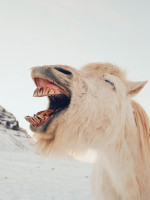 Funny  Laughing  Horse Status Picture