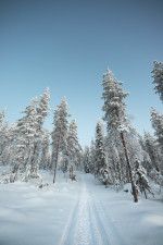 Nature  White  Snow  Trees Status Picture