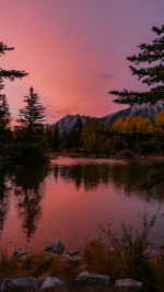 Trees  Water  Sunset   Nature Status Picture