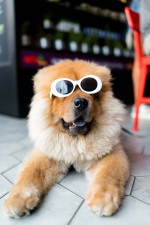 Cool  Dog  Glasses  Funny Status Picture